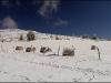 Vercors - Plateau des Ramées - 23 novembre 2008