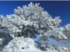Lans en Vercors - 12 février 2012