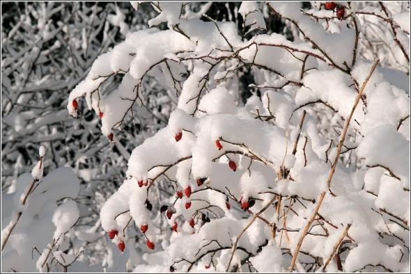 Lans en Vercors - Route de la Sierre - Samedi 2 janvier 2010