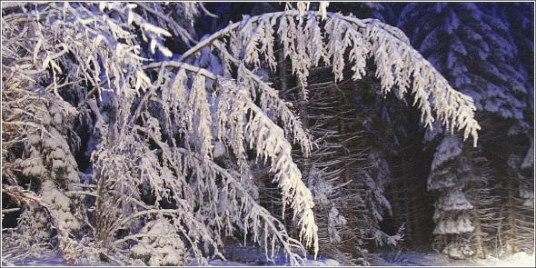 Lans en Vercors - La Sierre - 1400m - 16 novembre 2010