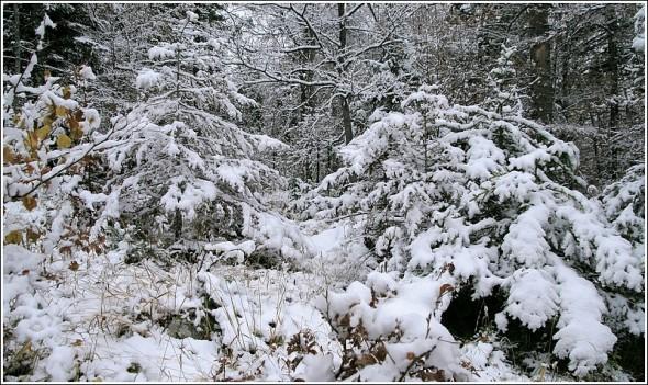 Lans en Vercors - La Sierre 1400m - 3 novembre 2009