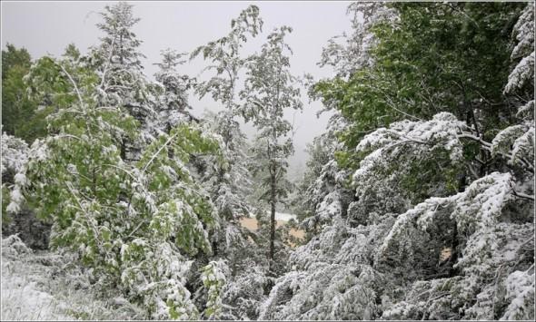 Neige à Lans en Vercors - La Sierre - 1400m - 1er juin 2011