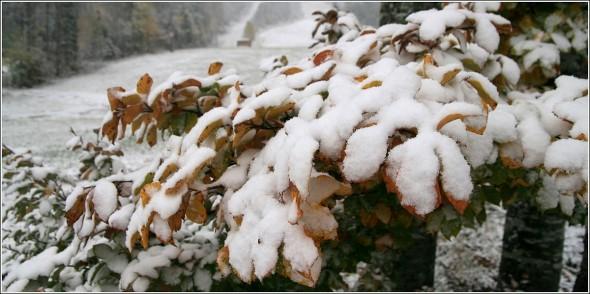 Première neige à la Sierre - 1400m - Lans en Vercors - Dimanche 17 octobre 2010