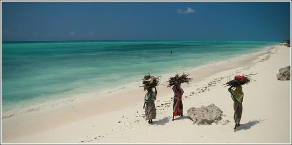 Femmes rapportant du bois, plage de Zanzibar ...